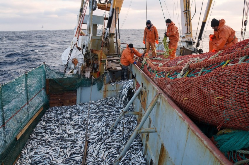Primorskuyu-rybu-zhdut-problemy